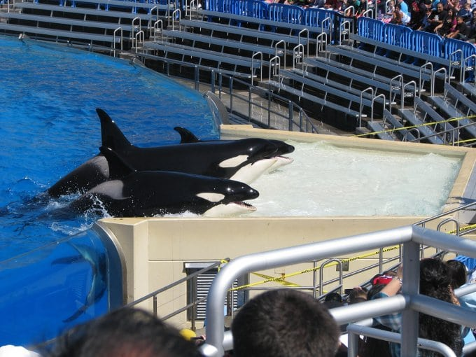 Another orca death at SeaWorld