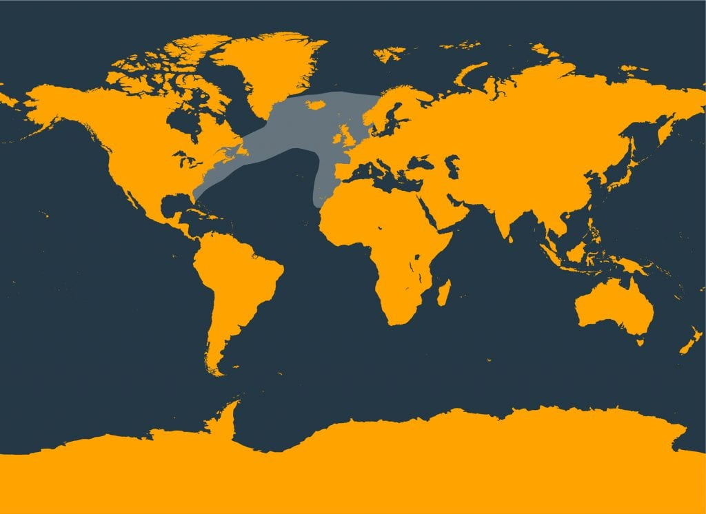 North Atlantic right whale distribution map