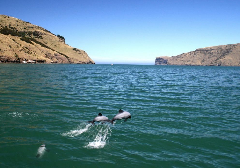 new-zealand-dolphin-mike-bossley